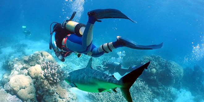 Scuba Diving In Playa del Carmen – The Magic Begins Under Water